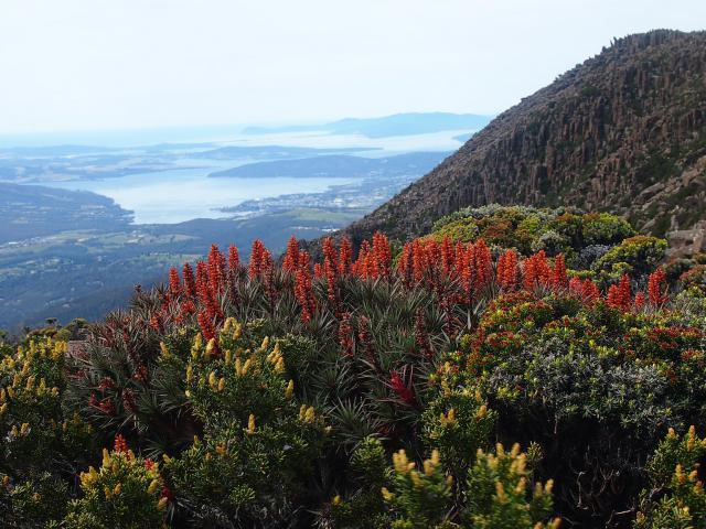Mt Wellington park