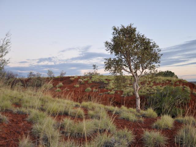 Tanami Desert